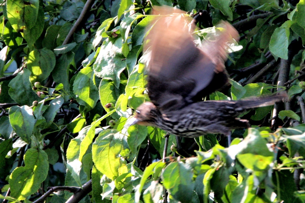 Bird Attack! Dive bombing birds attack humans! (1/3)