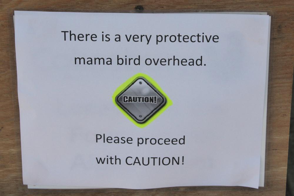 Bird Attack! Dive bombing birds attack humans! (3/3)