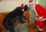 Santa enjoys a bear...