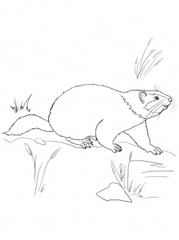read more poems and songs cute groundhog coloring page
