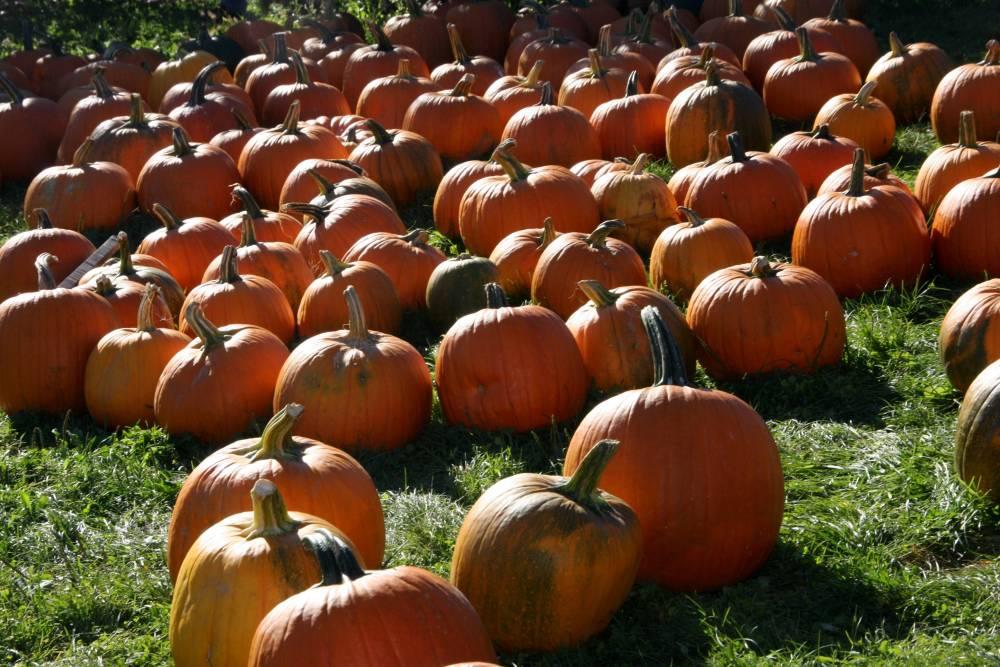 11 Facts About Pumpkins (2/5)