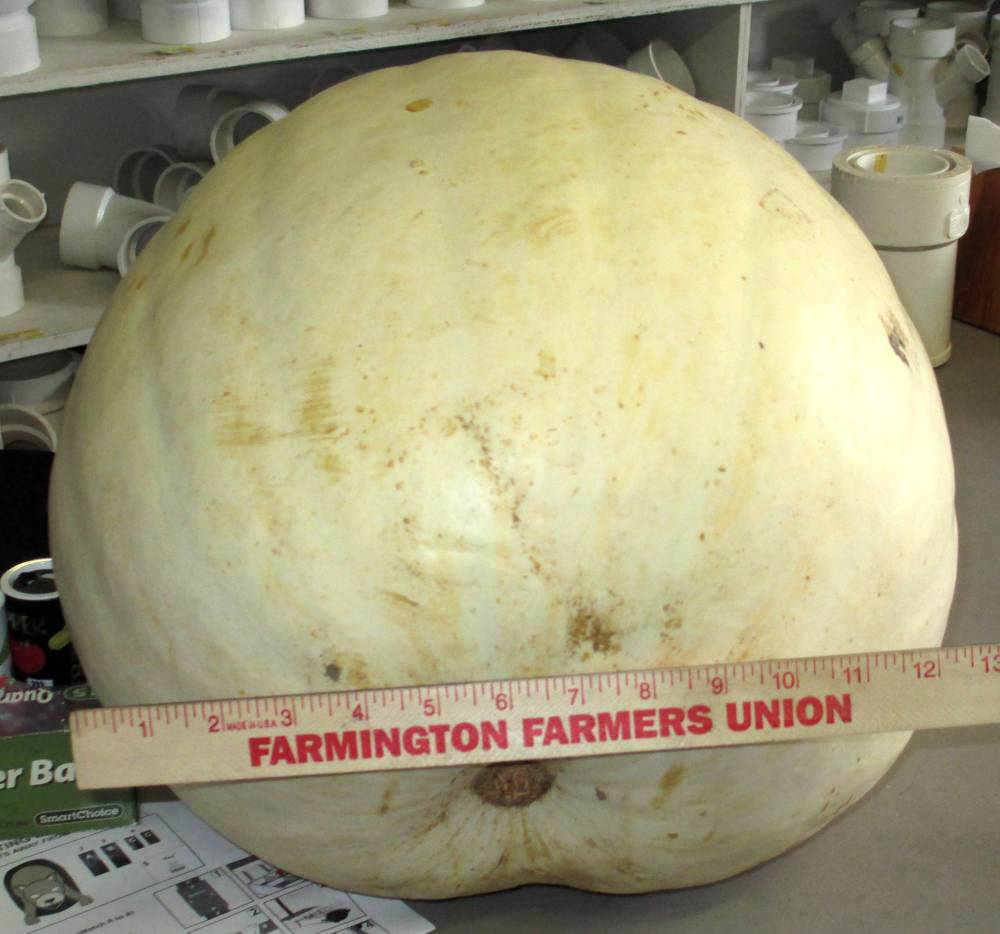 11 Facts About Pumpkins (4/5)