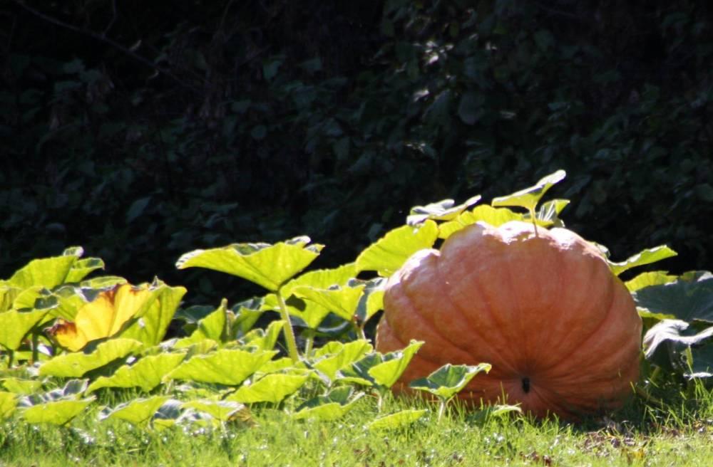 11 Facts About Pumpkins (3/5)