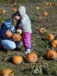 First, find the perfect pumpkin...