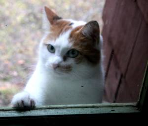 Please let me come in...it's frigid cold out here